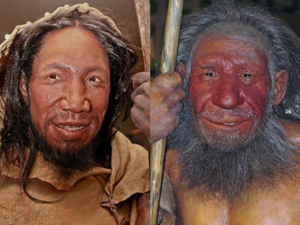 Comparación de caras de Homo sapiens y Neandertal. (La caja de la naturaleza / CC BY-SA 4.0)