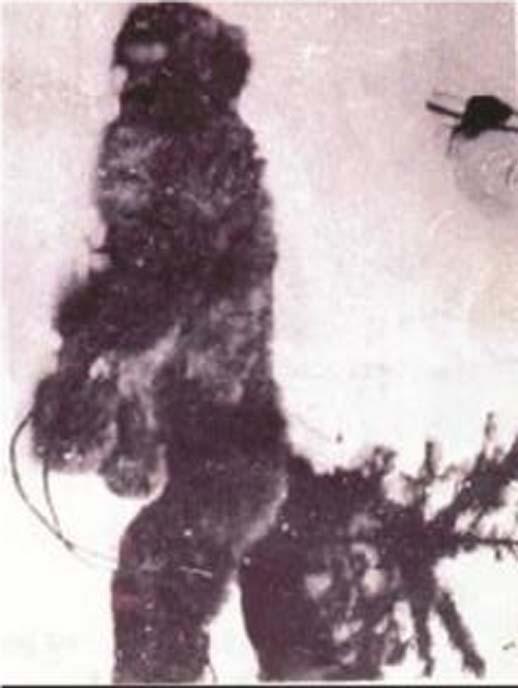 Dettaglio del bigfoot nella foto del 1894. (L'autore ha fornito)