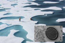 Main: NASA researchers working on the Arctic ice (NASA Goddard Space Flight Centre / Flickr). Inset: Mollivirus sibericum particle (Photo: PNAS)