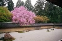 Finding Zen in the Worlds Most Famous Rock Garden ...
