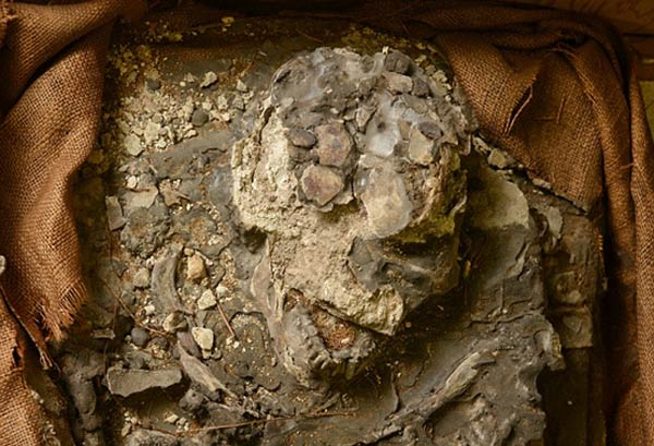 The Rediscovery Of Noah A 6500 Year Old Skeleton Who