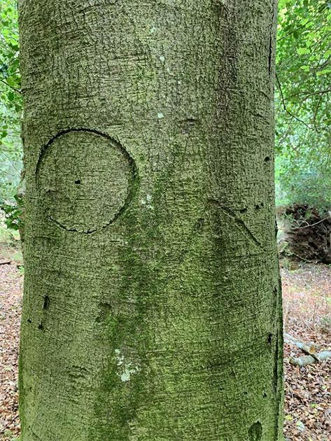 Une marque de sorcière gravée dans l'un des arbres.  (Parc national New Forest)