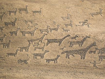 Llama geolyphs in the Atacama Desert