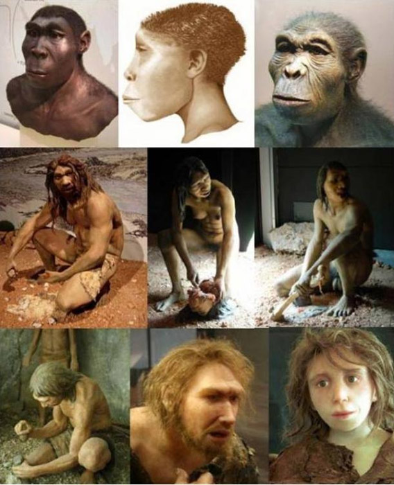 A mix of hominid (genus Homo) depictions; (from right to left) H. habilis, H. ergaster, H. erectus; H. antecessor - male, female, H. heidelbergensis; H. neanderthalensis - girl, male, H. sapiens sapiens.