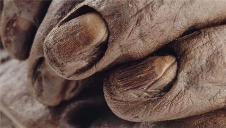 Close up of the well preserved nails of Old Croghan Man