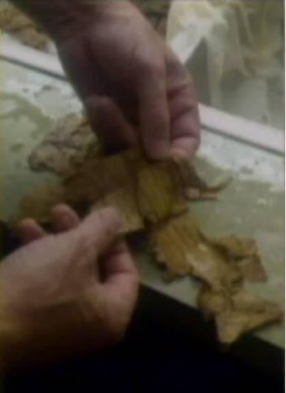 Slide John McDowell presents showing him pulling apart fragments of precious papyri.