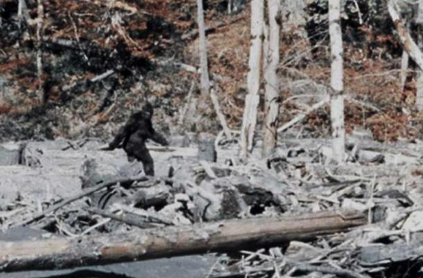 Bigfoot dans le film Patterson-Gimlin.
