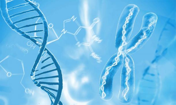 DNA double helix molecules and chromosomes: the forensic evidence that proves early human interbreeding and when. (Giovanni Cancemi / Adobe Stock)