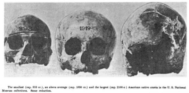 Figura 3: Varios cráneos de tamaño se encuentran en Potomac Creek, Condado de Stafford, Virginia, 1937.