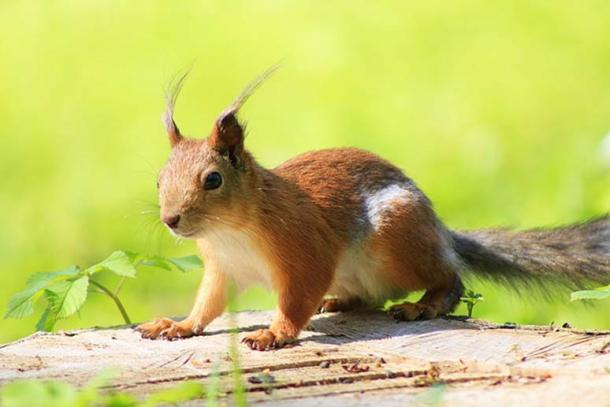 squirrel fuzzy messengers from