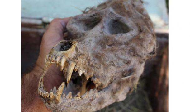 Un fermier bulgare découvre un crâne ressemblant à un loup-garou dans une boîte scellée