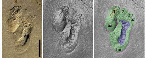 Le orme iniziali di ominina scoperte su Creta. Credito: Matthew Robert Bennett