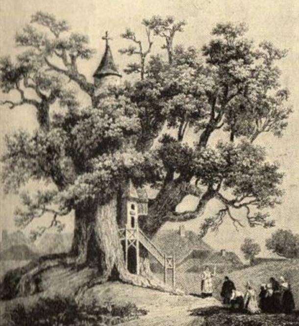 Gravure du XVIIIe siècle du Chêne de la Chapelle