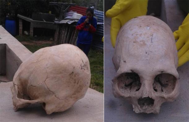 Angle latéral et avant des crânes.  (Image: © Philip JS Jones)