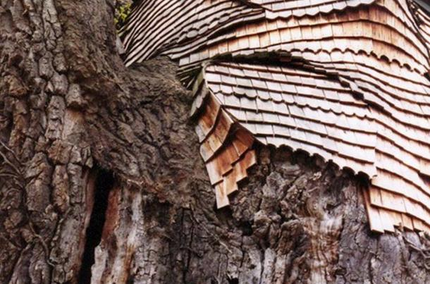 A protective layer of oak shingles now cover the tree.
