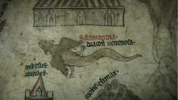 A winged salamander seems to fly its way across the Hereford Mappa Mundi.