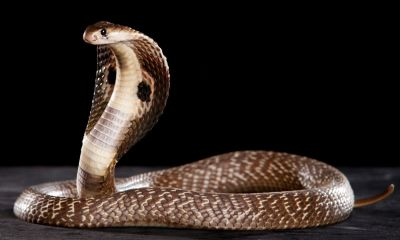 Meaning of seeing snake in dream