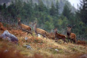 Pics from Ireland tours Killarney National Park