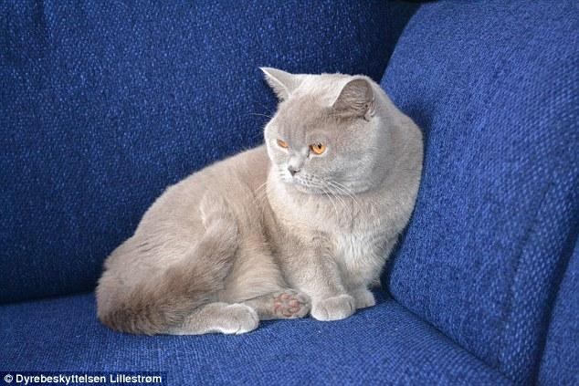 Na foto, o gato que foi abandonado em aeroporto