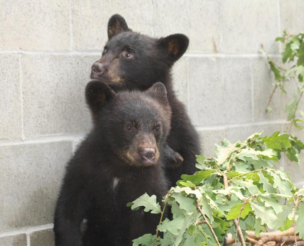 Foto: Facebook/ North Island Wildlife Recovery Centre