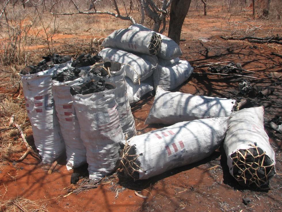 Carvão apreendido pela DSWT. A queima de carvão também mata animais selvagens e destrói seu habitat. Foto: David Shedrick Wildlife Trust