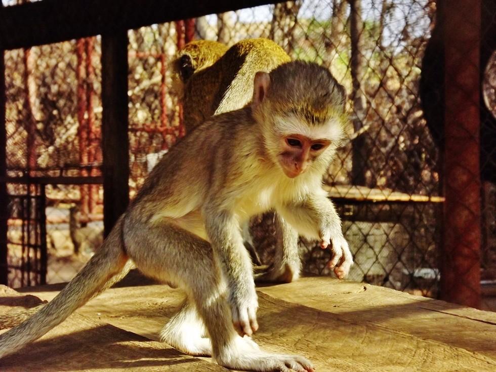 Foto: Kat Stansfield/Lilongwe Wildlife Trust