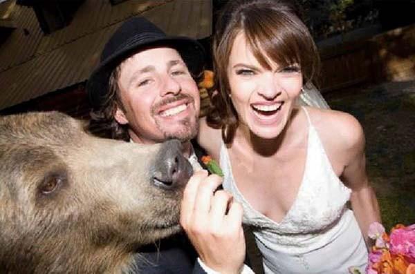 Urso-casamento