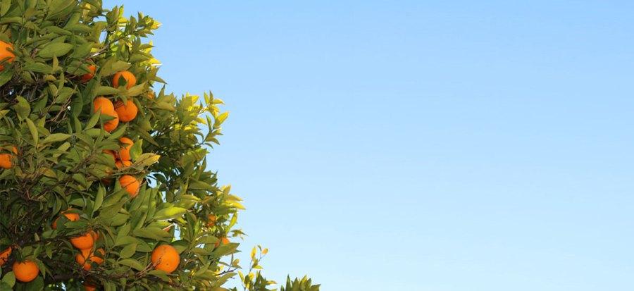 Séville, ville aux mille et un orangers