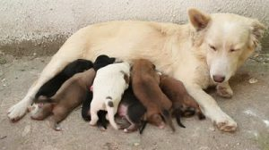 stray dog and puppies
