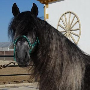 Grand Prix horses for sale-Tempra