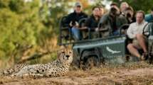Safari Game Drive Pristine Wilderness Of Kzn Andbeyond