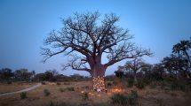 Stay Longer Botswana Offer Andbeyond