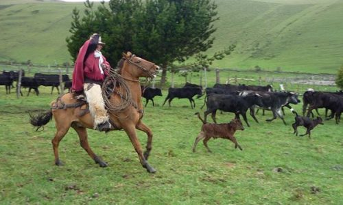 folklore cowboy ecuador typical  haciendas nature life mountain lodge illinizas