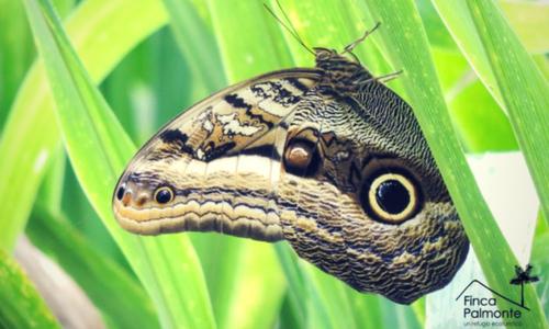 butterfly finca banos photography tour Ecuador & Galapagos
