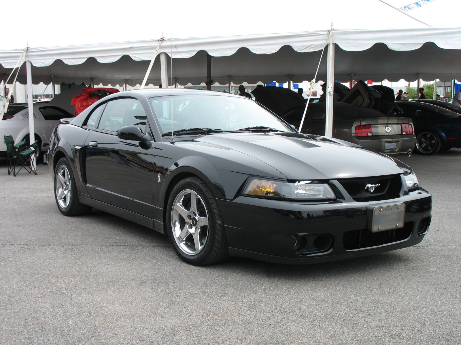 hight resolution of 2003 ford mustang cobra the terminator