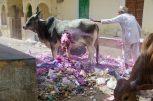 wpid406-Indien-090.jpg