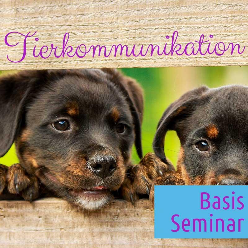 Basis Seminar Tierkommunikation – Seehotel Moldan Postmünster