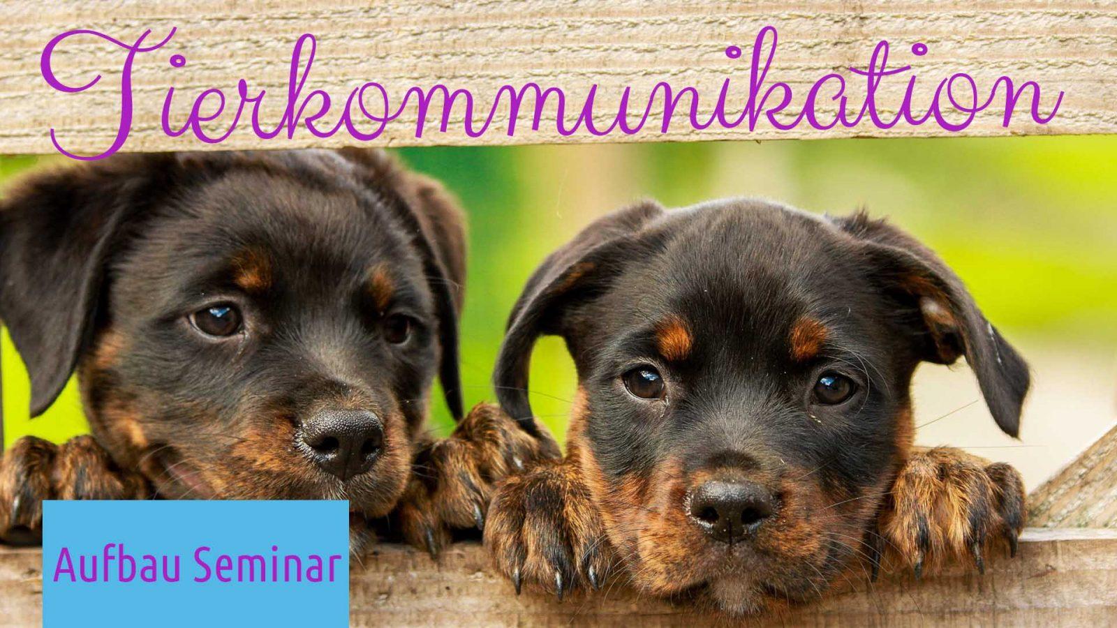 Aufbau Seminar Tierkommunikation