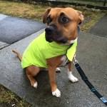 Meet Max! He needs a home!