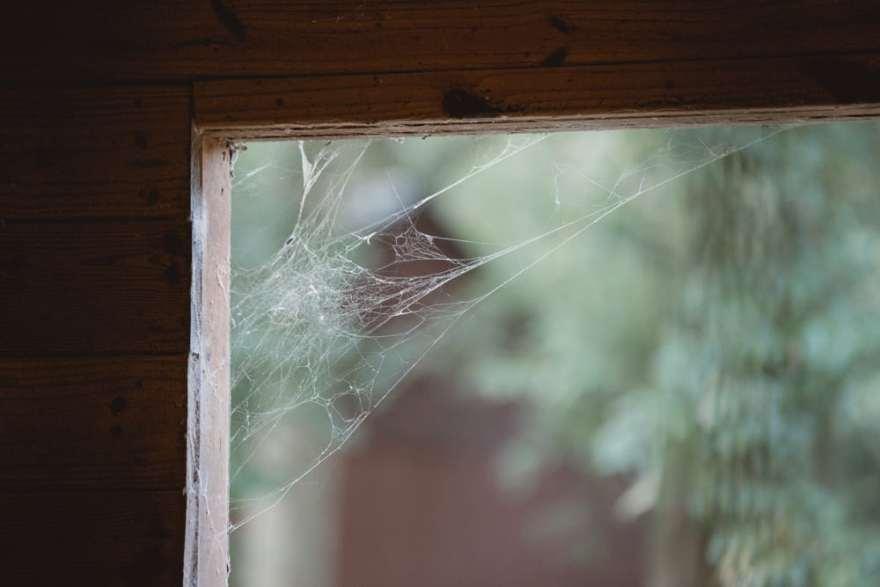 spider web farm milton georgia