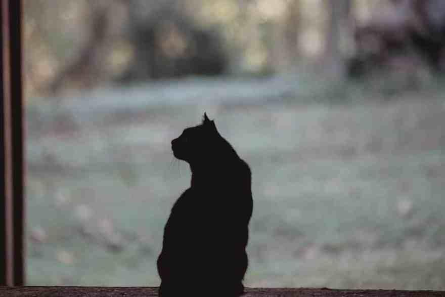 cats silhouette kathy duffy farm milton georgia
