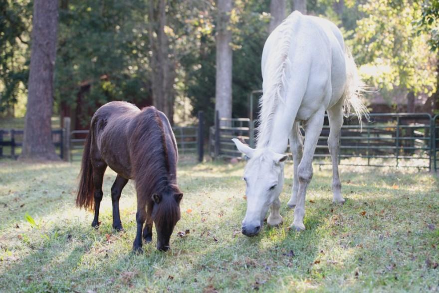 Kathy Duffy dressage horse farm horses milton Georgia