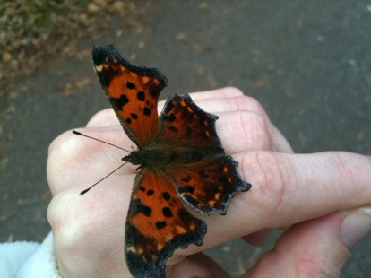 butterfly on hand november 2009