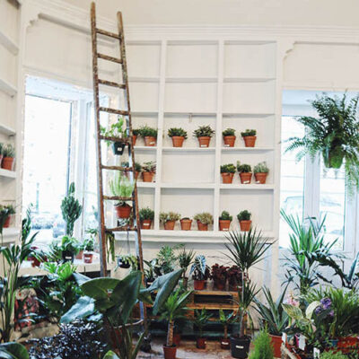plantae | where to shop