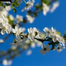 Primavera…