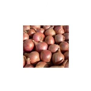 oignon-roscoff