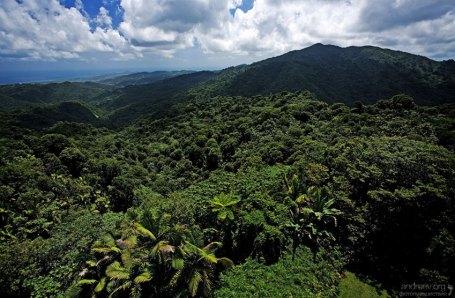 Влажный тропический лесь El Yunque - единственный на территории США.