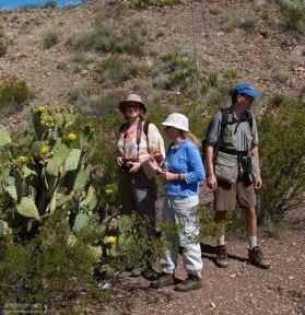 """Катя, Таня и Илья на тропе """"Mule's ears"""" у гигантского кактусового куста."""