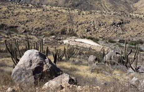 Булыжники и кактусы на склонах каньона.