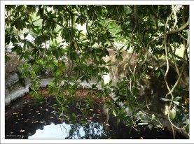 Водоем перед гротом в парке Кинта да Регалейра.
